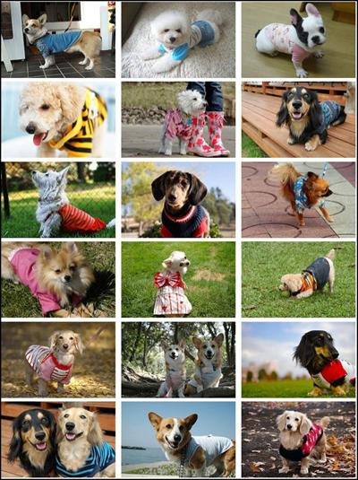 手作り犬服教室DVD 大島ゆみこ コーギー ファッション 通販 サイト